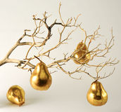 Dry Branch with Golden Pears. A dried out branch with four golden pears Stock Image