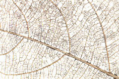 dry branch of leaf for pattern and background Stock Photo