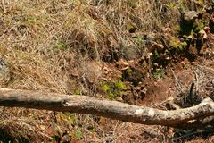 Dry branch lying over a ravine. A view of a long dry branch lying over the width of a ravine Stock Photos