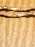 Dry branch on the sand Royalty Free Stock Photos