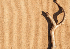Dry branch on the sand Royalty Free Stock Images