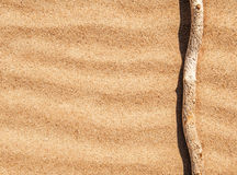 Dry branch on the sand Stock Photography