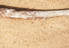 Dry branch on the sand Stock Photos