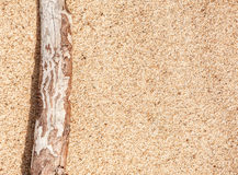 Dry branch on the sand Royalty Free Stock Photo