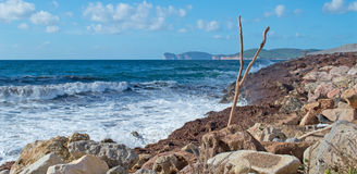 Dry branch by the shore Stock Images