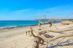 Dry branch by the shore in Rena Majore Royalty Free Stock Photos