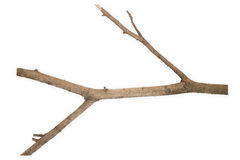 Dry branch Royalty Free Stock Photography