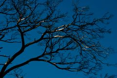 Dry branch of tree Royalty Free Stock Photo