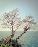 Dry branch tree on the coast Stock Images