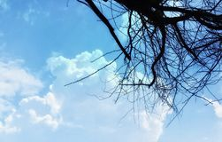 Dry branch of tree with the could. Dry branch of tree with the blue sky and could background Stock Image
