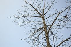 Dry branch tree Stock Photo