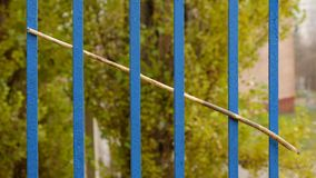 A dry branch of a tree sticking out in a grid of a fence. Royalty Free Stock Photos