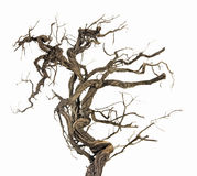 Dry branch on white Stock Images