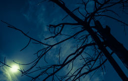 Dry branches against dark blue sky Stock Photo