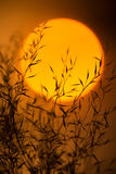 Dry branches against the evening sun. Branches of plants with leaves at sunset. Royalty Free Stock Photography