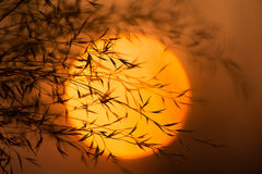 Dry branches against the evening sun. Branches of plants with leaves at sunset. Royalty Free Stock Images