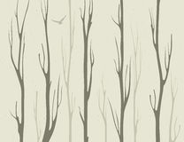 Dry branches of bamboo trees Royalty Free Stock Photo