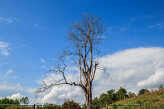 Dry branches in the blue sky background Stock Images