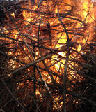 Dry branches burn. In the fire Royalty Free Stock Image