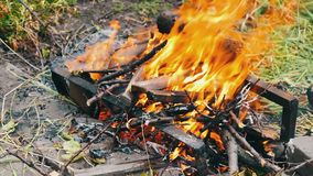 Dry branches burn on ground, branches of trees burn on fire stock footage