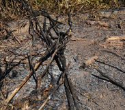 Dry branches burn Stock Photo