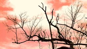 Dry branches Royalty Free Stock Photos