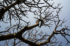 Dry branches Royalty Free Stock Photography