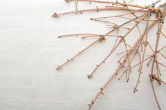 Dry branches and fallen spruce needles Royalty Free Stock Photo