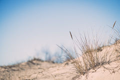 Dry branches of grass - retro vintage effect. Dry branches of grass on the beach in early spring - retro vintage effect stock photography