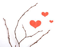The dry branches with heart shapes Royalty Free Stock Image