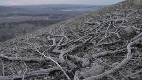 Dry branches in the mountains stock footage