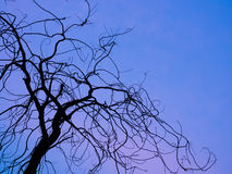 Dry branches silhouette Royalty Free Stock Images