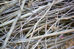 Dry branches and sticks Stock Image