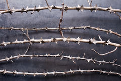 Dry branches with thorn on metal texture Royalty Free Stock Images