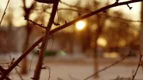 Dry branches of a tree buds silhouette sunlight nature winter indoors. Dry branches of tree buds silhouette sunlight nature winter indoors stock video footage