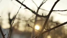 Dry branches of a tree buds silhouette sunlight winter indoors nature. Dry branches of tree buds silhouette sunlight winter indoors nature stock footage