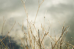 Dry branches of a tree close-up background Royalty Free Stock Photo