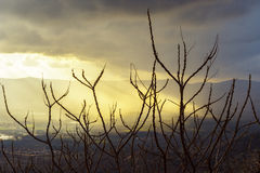 Dry branches of trees, sun rays make their way through the dark clouds. Concept: revival Stock Photos