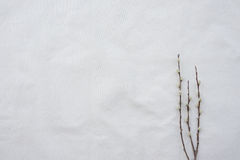 Dry branches on white muslin fabric Stock Images