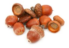 Dry brown acorns Stock Images