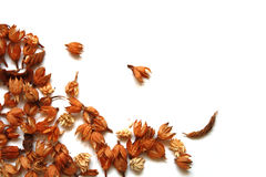 Dry brown autumn flowers. Dry brown autumn decoration plants isolated on white background Stock Photo