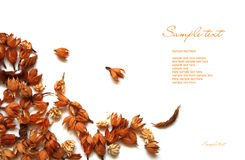 Dry brown autumn flowers. Dry brown autumn decoration plants isolated on white background with a text field Royalty Free Stock Photos