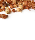 Dry brown autumn flowers. Dry brown autumn decoration plants isolated on white background Stock Image