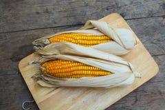 Dry brown corn Stock Image