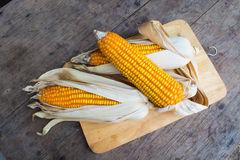Dry brown corn Stock Photography