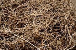 Dry brown cut vines are evenly textured intertwined on the ground. Dry brown contrasting cut vines are evenly textured intertwined on the ground Stock Photography