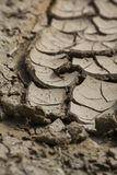 Dry brown earth close-up Royalty Free Stock Image