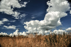 Dry brown grass field and amazing blue sky with cumulus clouds. Landscape Royalty Free Stock Images