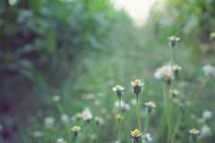 Dry brown grass flower field, weed plant closeup. Dry brown grass flower field in morning light, weed plant closeup, copy space royalty free stock photo