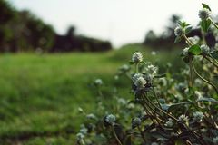 Dry brown grass flower field, weed plant closeup. Copy space warm tone light morning white floral petal background crop meadow garden outdoor backyard country stock image